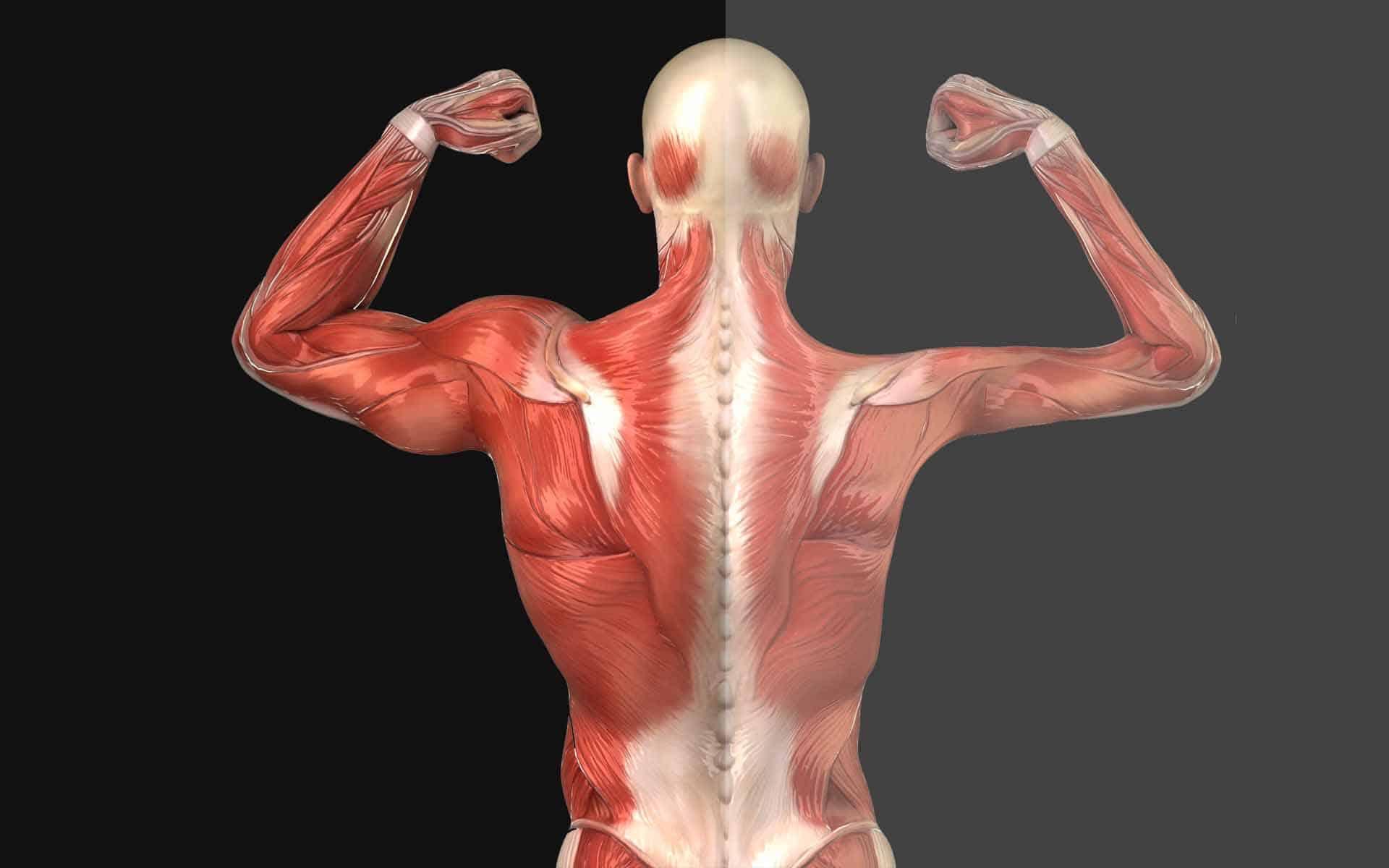Как избавиться от мышечной дистрофии