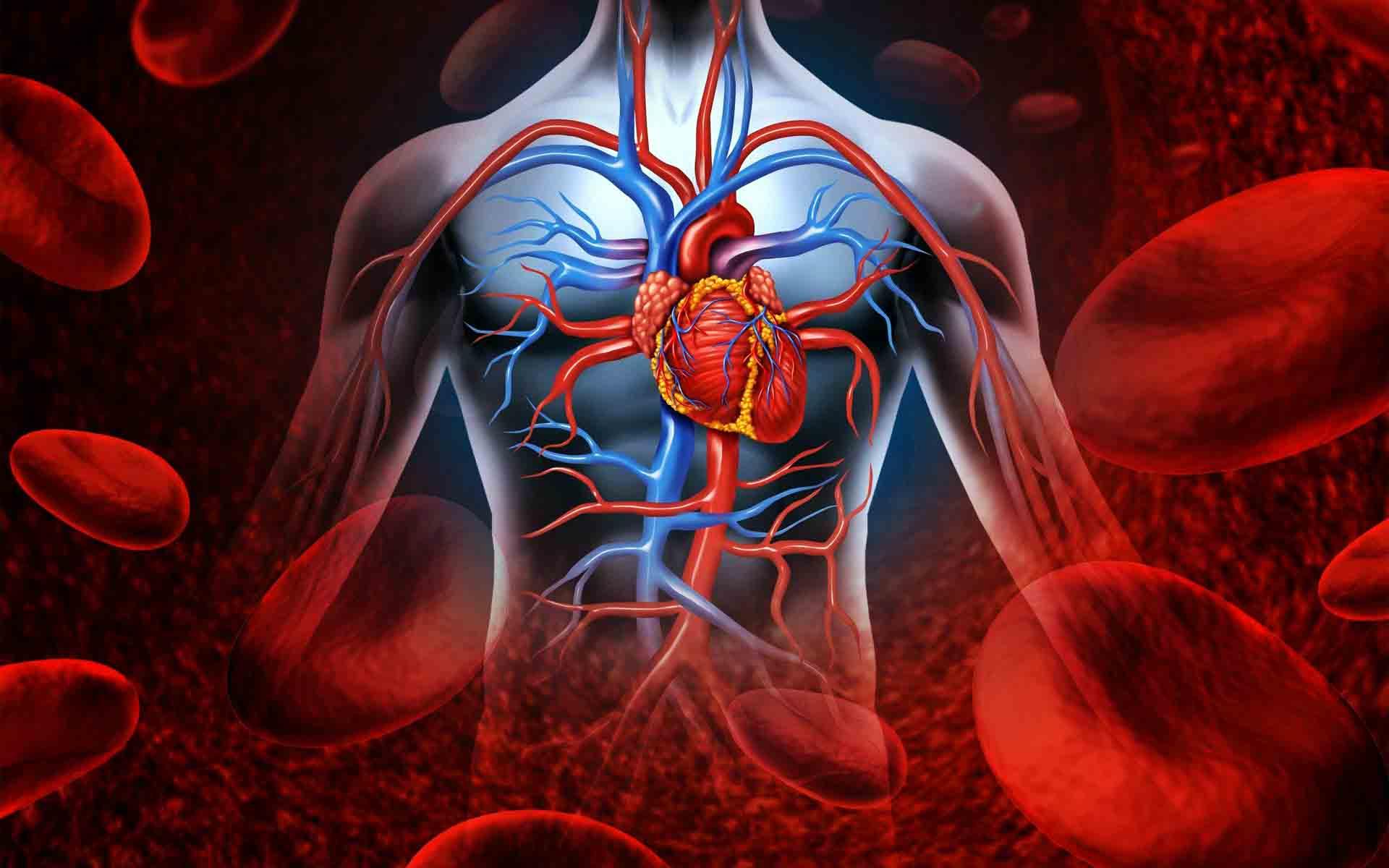 Как избавиться от высокого давления и болей в сердце?