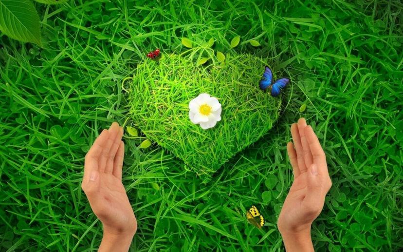 Медитация «Мыслить сердцем»